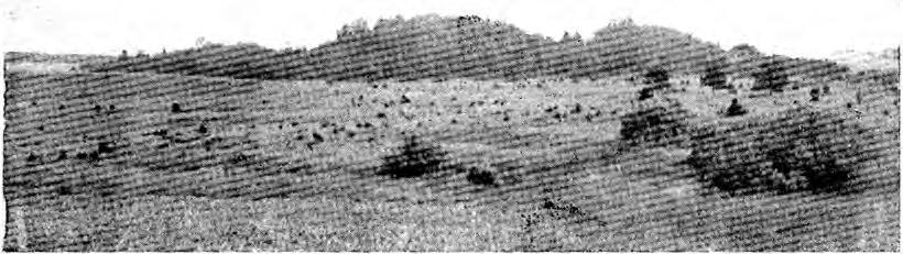 Elkamuižas pilskalns