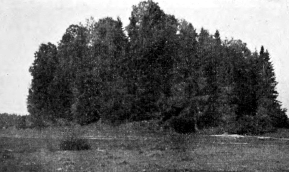 Gribažu pilskalns